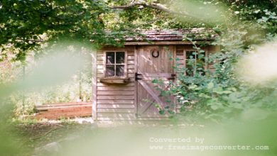 Reasons Why You Should Move to A Residential Shed